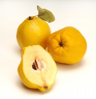 [Image: quince.jpg]